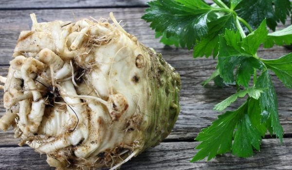 How to Store Celery Roots?