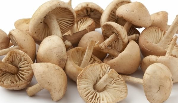 How To Clean Fresh Mushrooms?