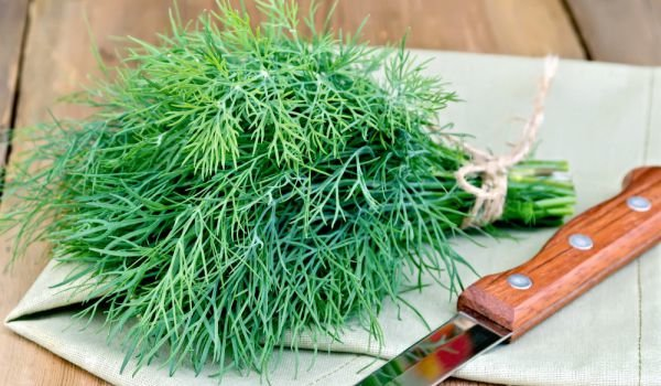 How to Store Fresh Dill?