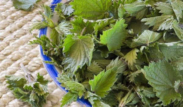 How to Store Nettle in the Freezer?