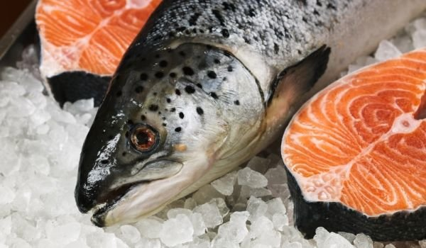 How Long Can Fish Stay Frozen for?