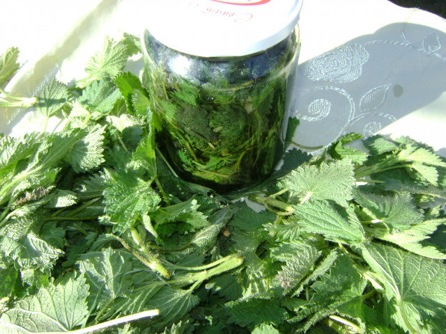 Nettle Preserves in Jars